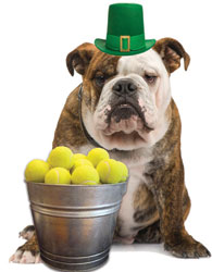 Win a Pot O' Gold & Help Spike's Fund