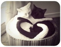 White Cat & Black Cat Hugging