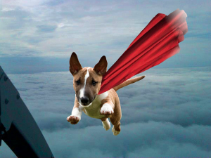 Wednesday Woof:  Super Newman!