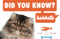 Did You Know Himalayan Cat