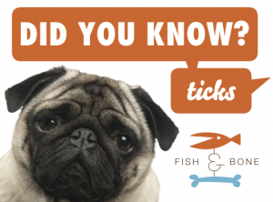 DYK-Ticks-2