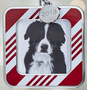 TODAY! Christmas Photos to Benefit The Common Canine 2013