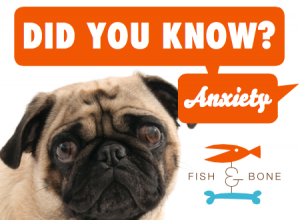 Did-you-know-anxiety-graphic