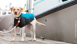 Winter Dog Coats that are Really Hot Right Now